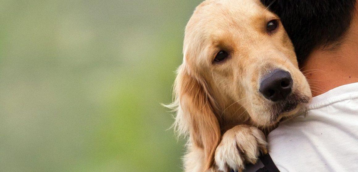 Mascotas ya no estarán prohibidas en departamentos