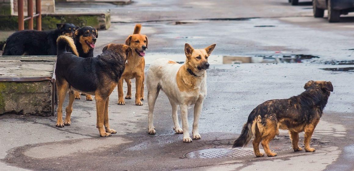 Perros callejeros rescataron a bebé abandonada en la India