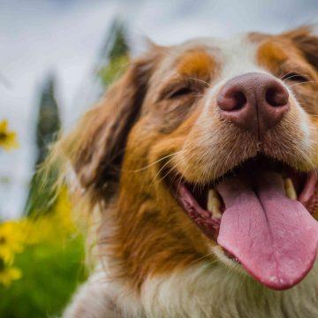 Cómo saber si me perro es feliz