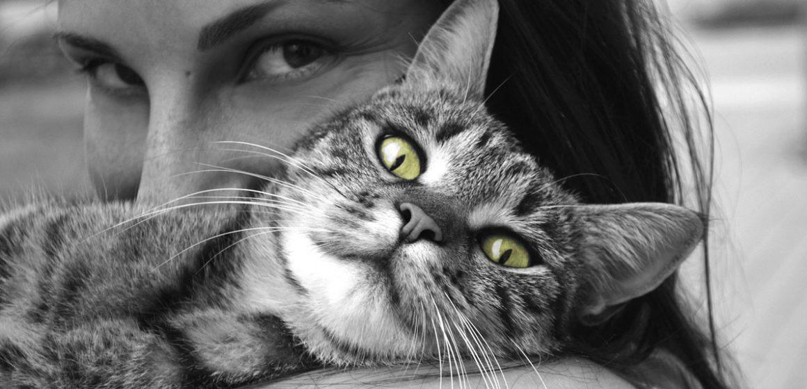 La autonomía de los gatos los ha convertido en la mascota preferida en Europa