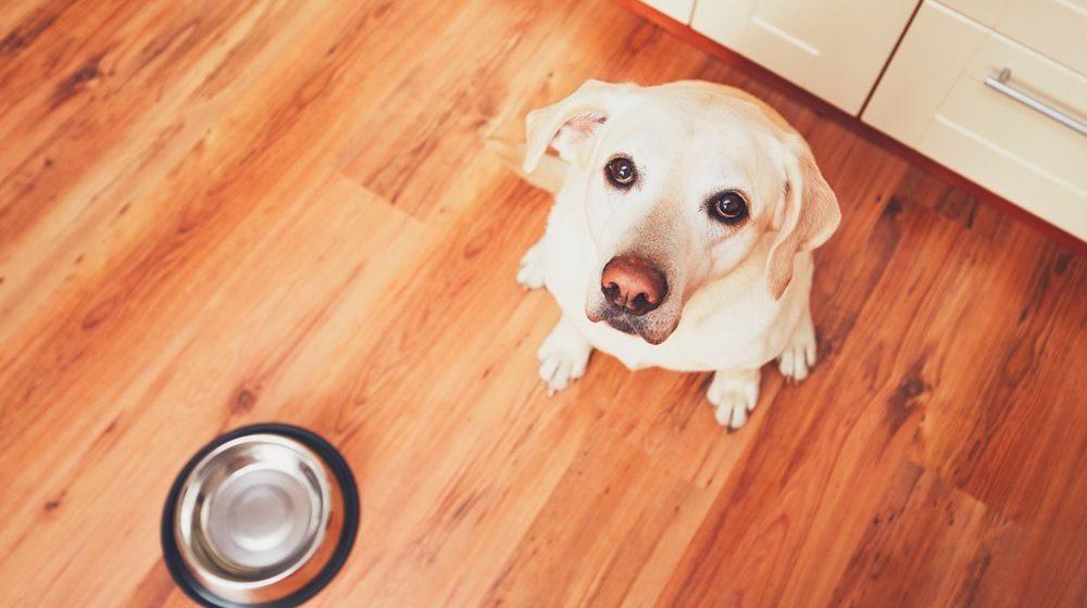 5 señales de hambre en tu perro