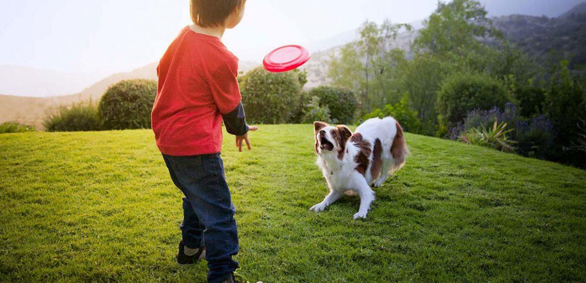 Jugando y aprendiendo con tu perro