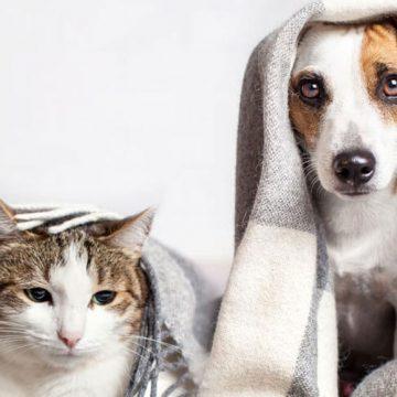 ¿Con qué frecuencia debes bañar a tu perro? ¿Se debe bañar a un gato?