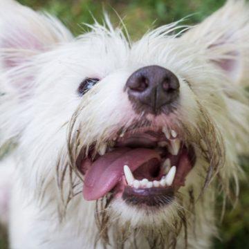 Corrigiendo comportamientos no deseados de su perro