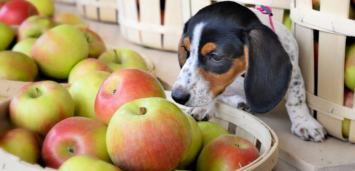 Beneficios de las frutas en los perros