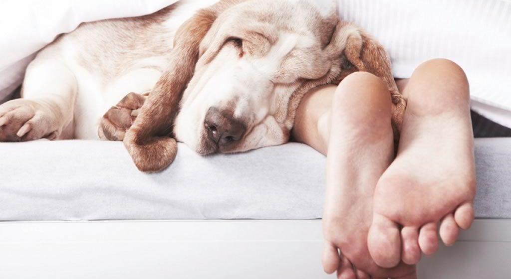 5 razones para dormir con tu perro