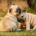 ¿Conoces la Ley de Protección y Bienestar Animal?