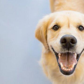 ¿Es bueno engreír a tu perro?