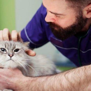 Las enfermedades más comunes que nos transmiten perros y gatos