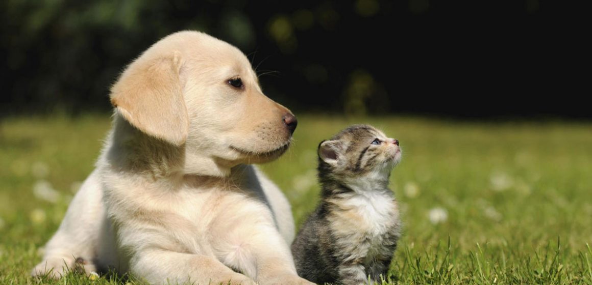 ¿Se puede precisar cuánto equivale un año calendario en años de perros y gatos?