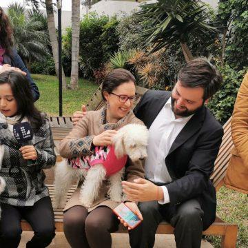 Presentarán proyecto para que esterilización de perros y gatos sea política de salud pública