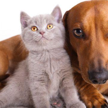 Se realizará campaña de esterilización de mascotas en Cajamarca