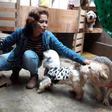 Ventanilla: Mujer que rescata perros callejeros no será sancionada