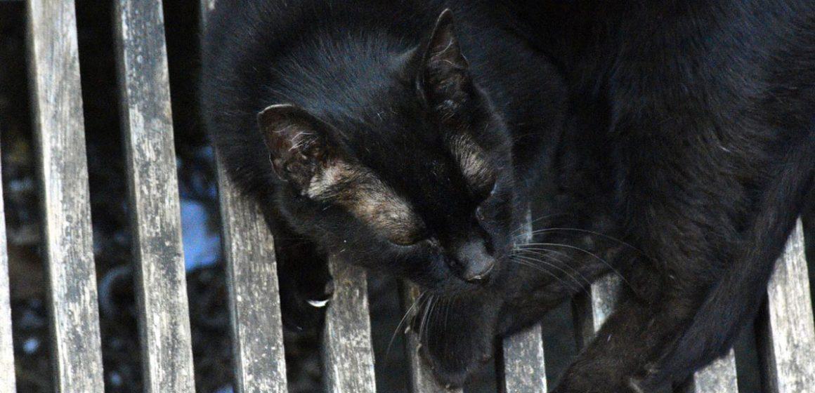 Amnesia en nuestras mascotas