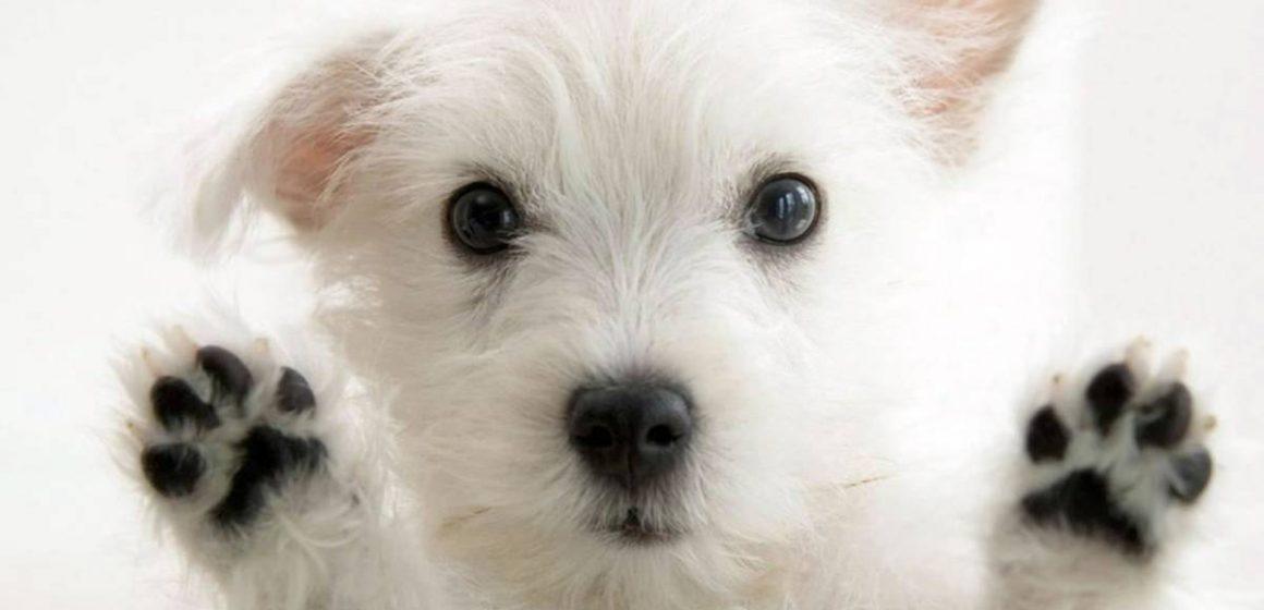 10 curiosidades que desconoces de tu perro