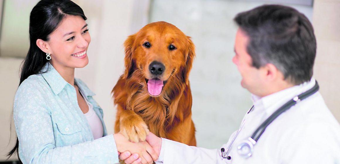 5 razones para llevar al veterinario a nuestras mascotas