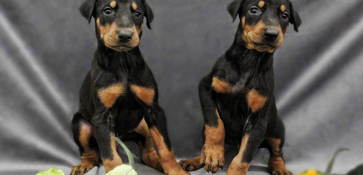 Insólito: clonar a tu mascota puede llegarte a costar hasta 53 mil dólares en China