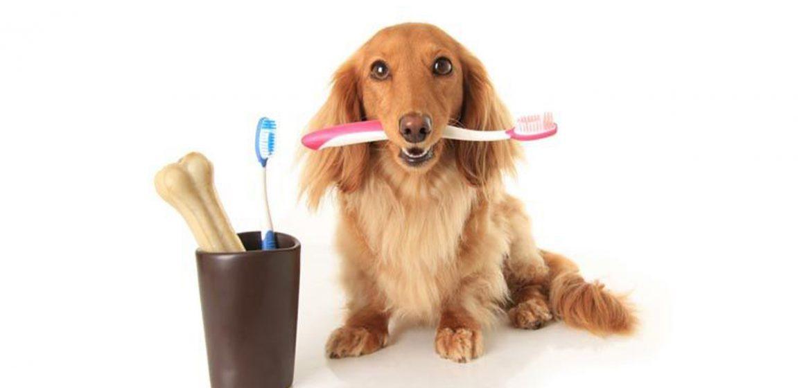 La importancia de una buena salud dental en cachorros