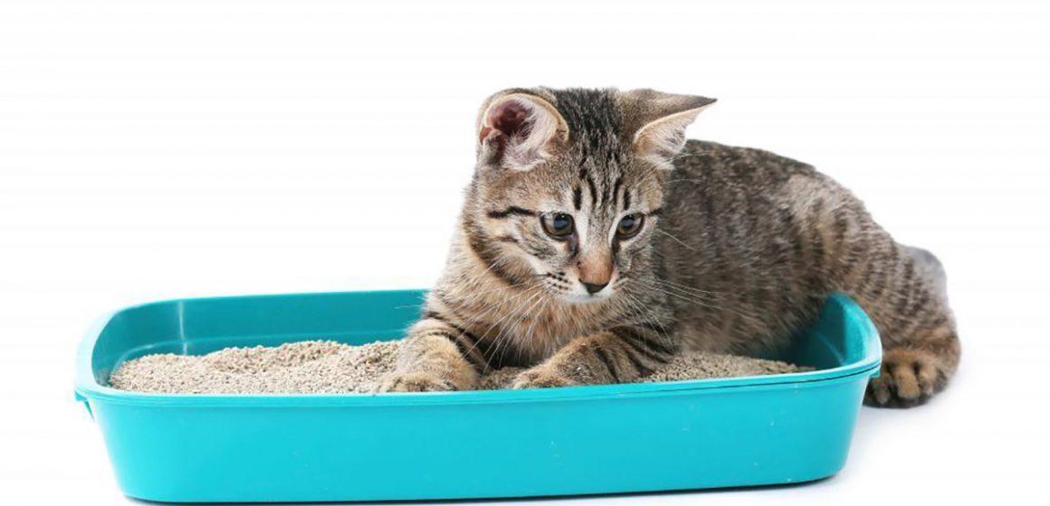 ¿Cómo elegir la mejor arena para tu gato?