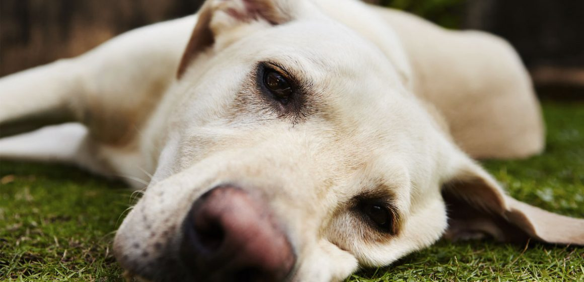Cómo identificar si un perro se siente aburrido, y qué hacer para evitarlo