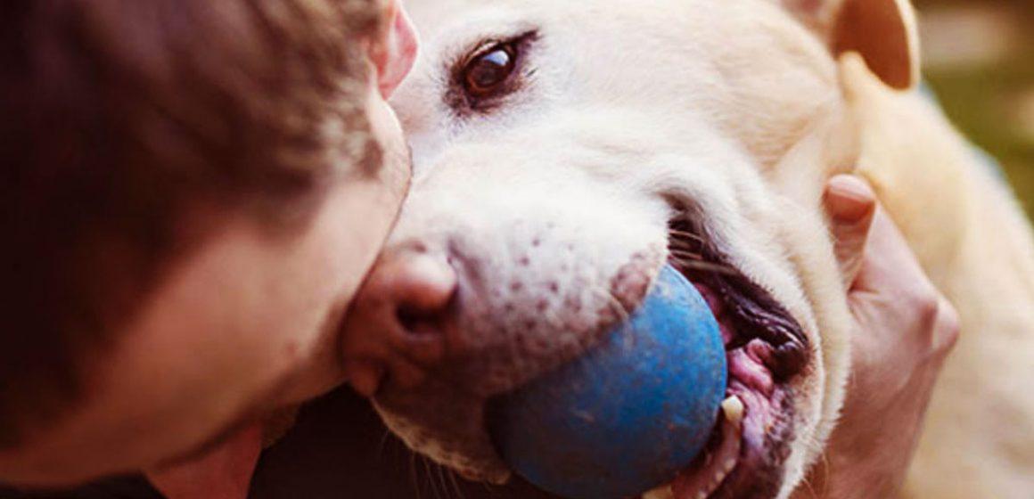 Señales que demuestran que el amor de nuestros perros es más grande que el de nosotros mismos