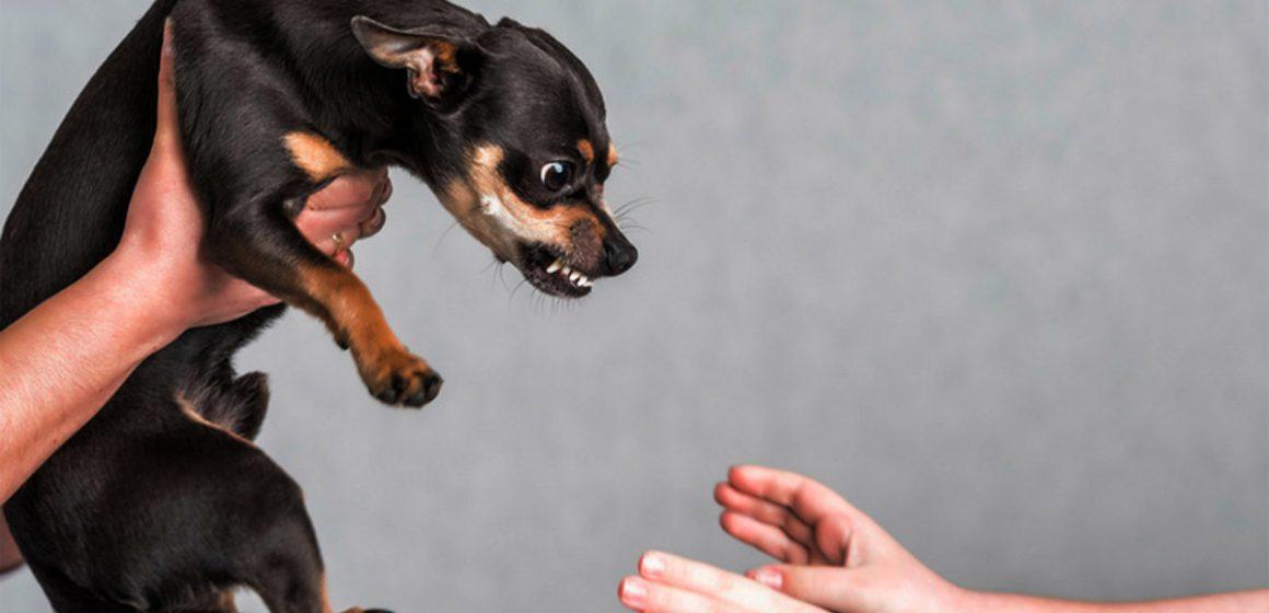 Estudio afirma que los perros pueden detectar a las personas malas