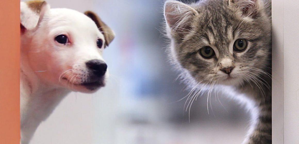 Perú y la falta de ley que regule la tenencia responsable de mascotas en viviendas