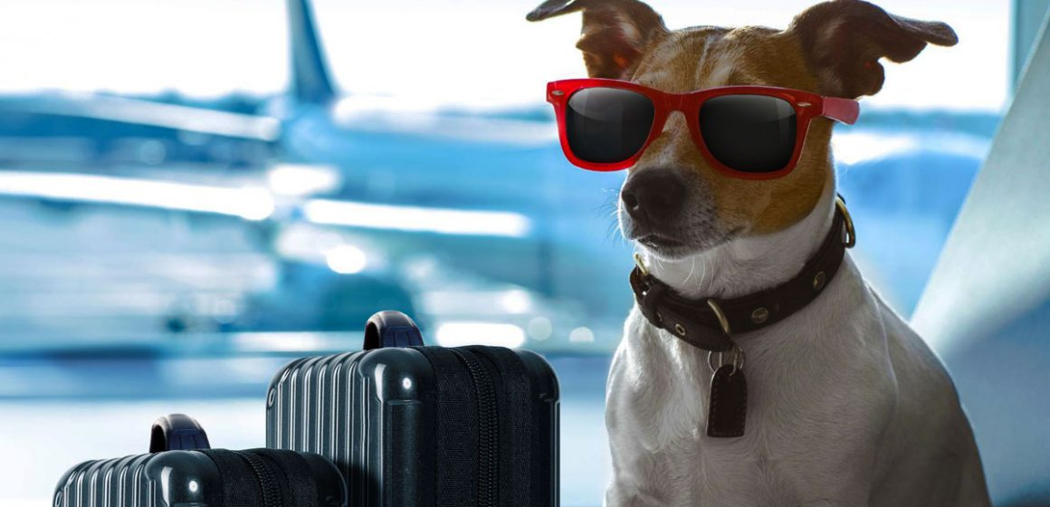 Cómo viajar con nuestras mascotas y no fracasar en el intento