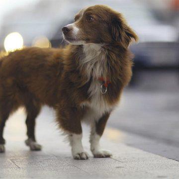 ¿Cuántos años puede vivir tu perro?