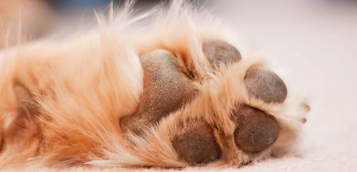 Cómo tratar las almohadillas de los perros