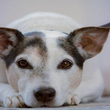 4 cosas que tu mascota sabe de ti