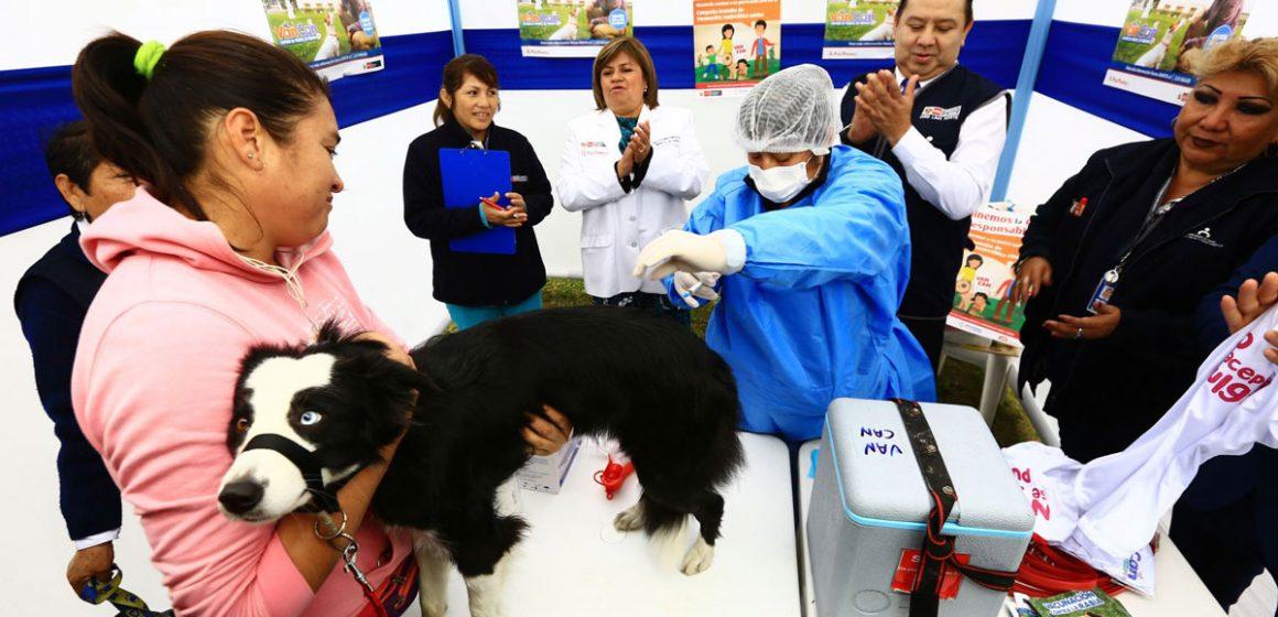 Minsa vacunará gratis contra rabia a más de un millón de perros en el país
