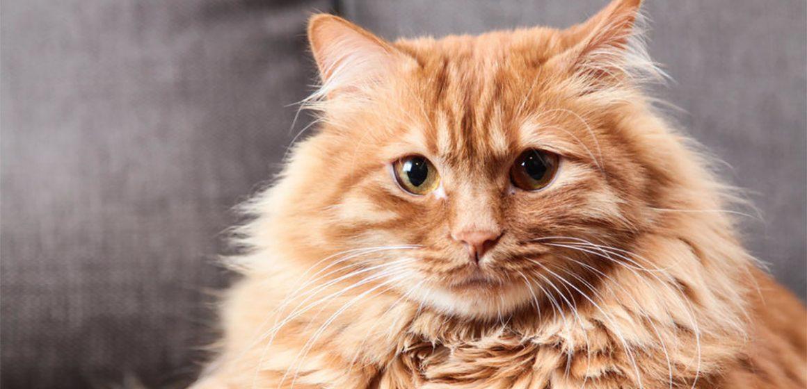 Gatos necesitan pasar tiempo con sus dueños para sentirse más seguros