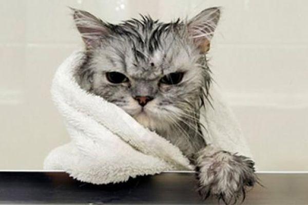 gato blog.jpg