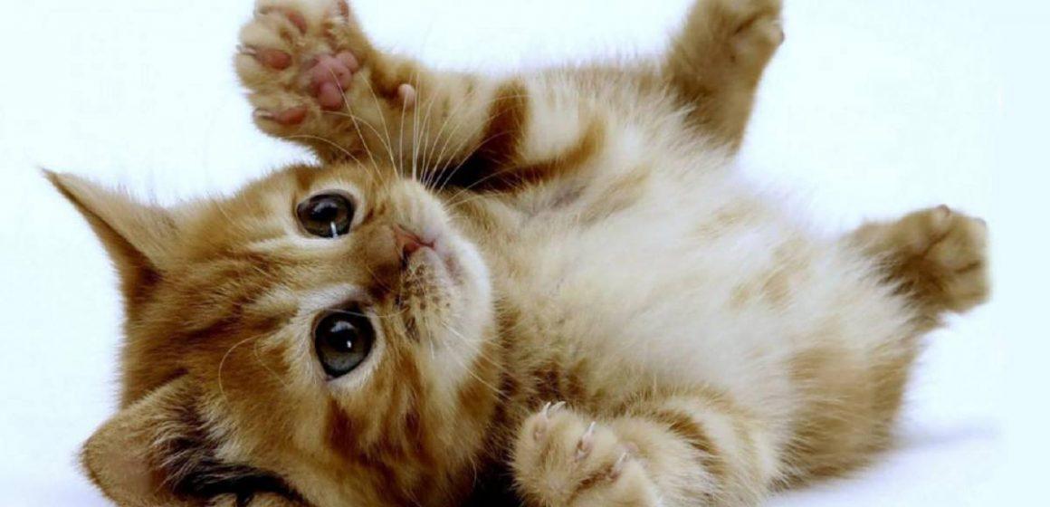5 beneficios de vivir con tu gato