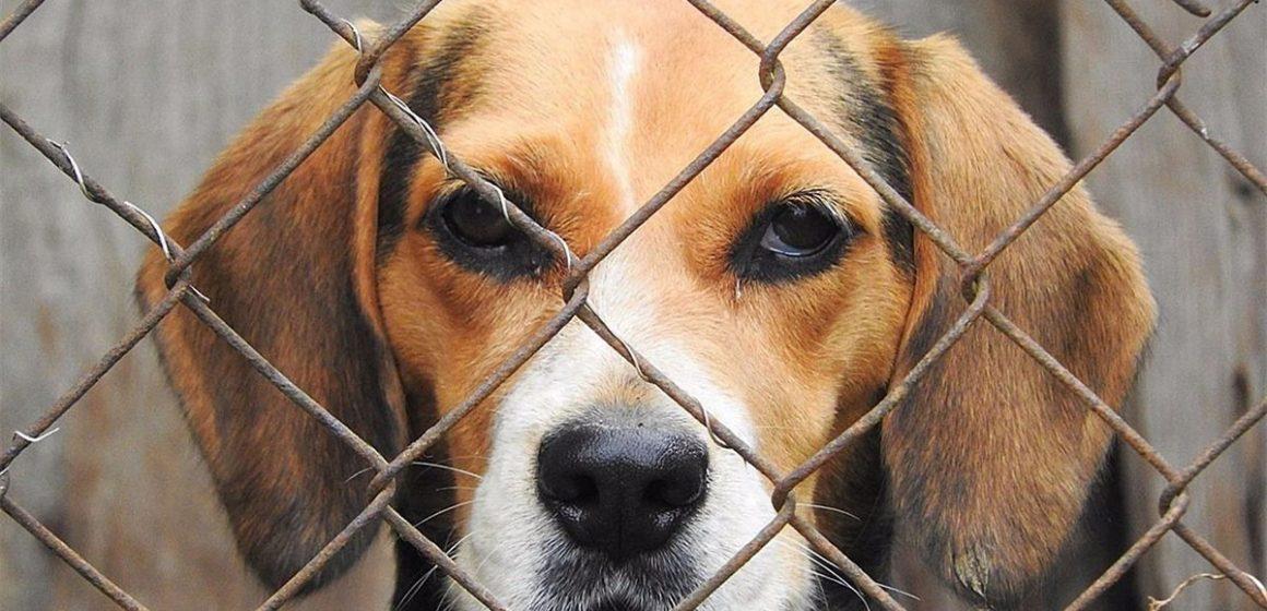 México en contra del maltrato animal