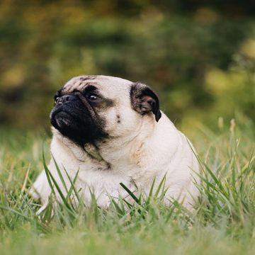Obesidad de las mascotas se asocia a sus dueños