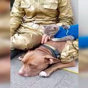 Hombre junta a perro, pericote y gato, y transmite mensaje de paz al mundo