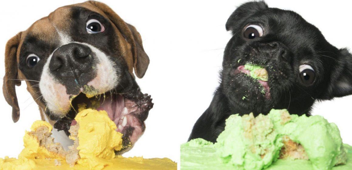 5 alimentos dañinos para tu perro