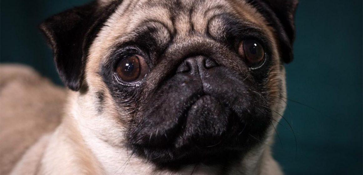 Los perros detectan la tristeza de sus dueños y tratan de eliminarla