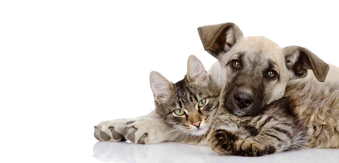 Tecnología móvil al servicio de tu mascota