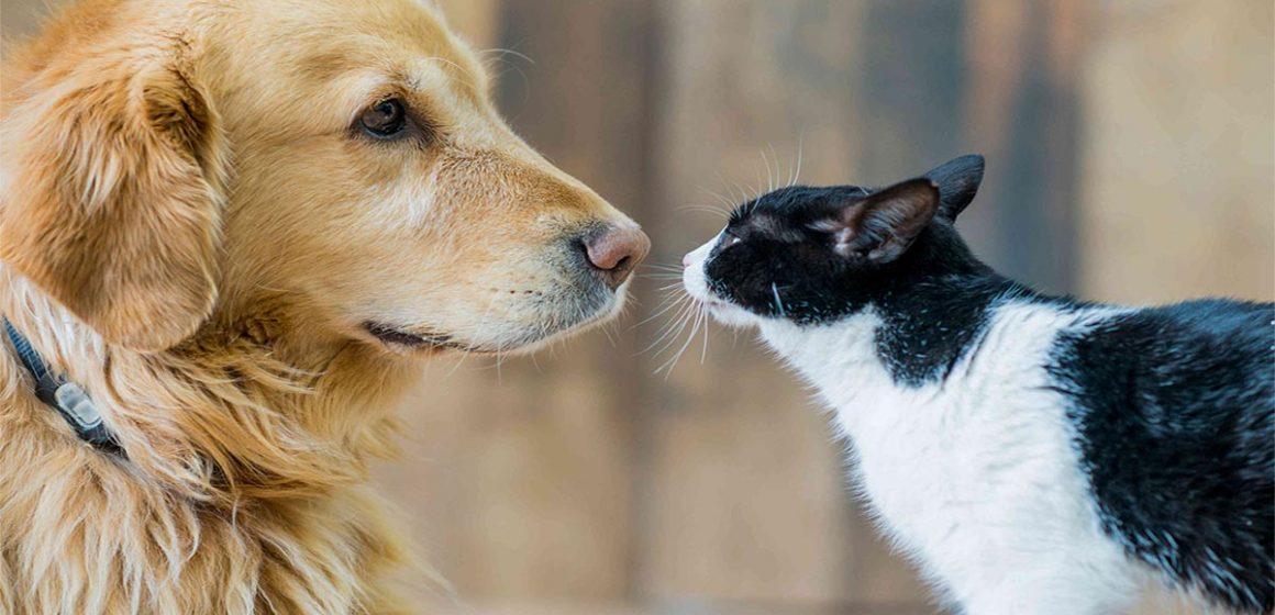 ¿Dueños prefieren más a sus mascotas que a sus hijos?
