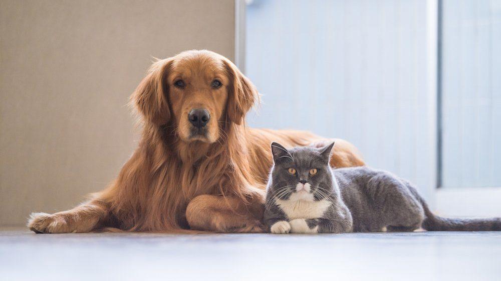 ¿Cuánto tiempo puede estar tu mascota solo en casa?