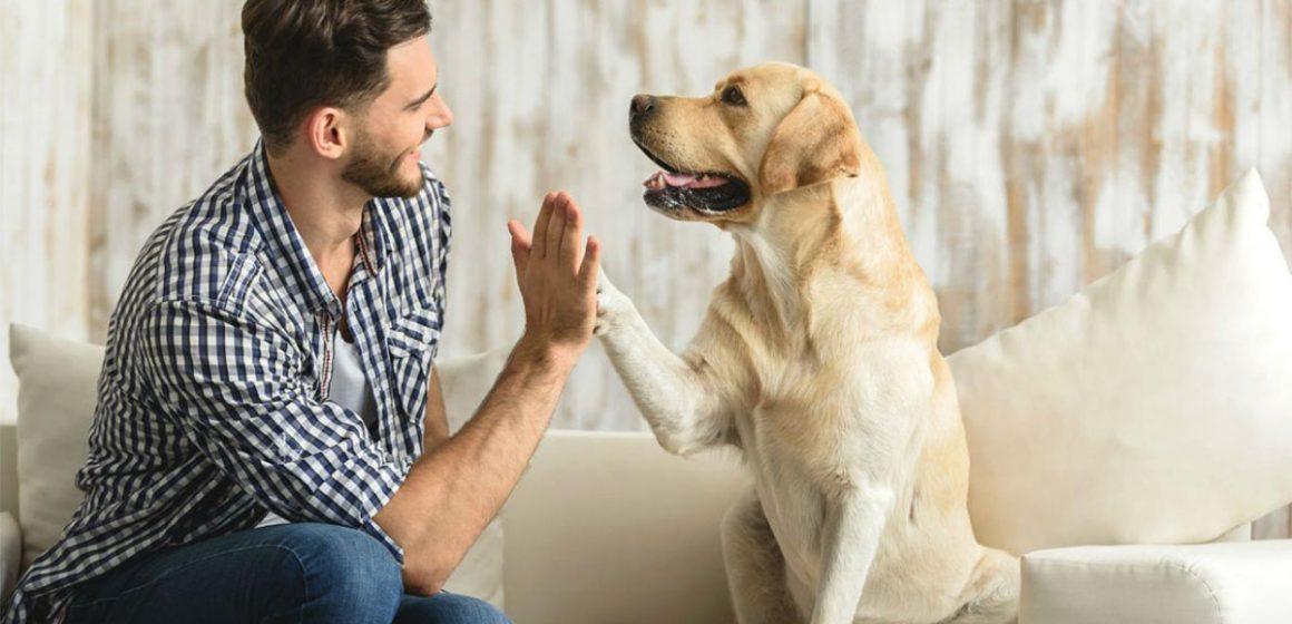 Perros de terapia para víctimas de violencia de género