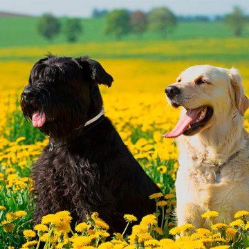 ¿La primavera afecta a nuestras mascotas?