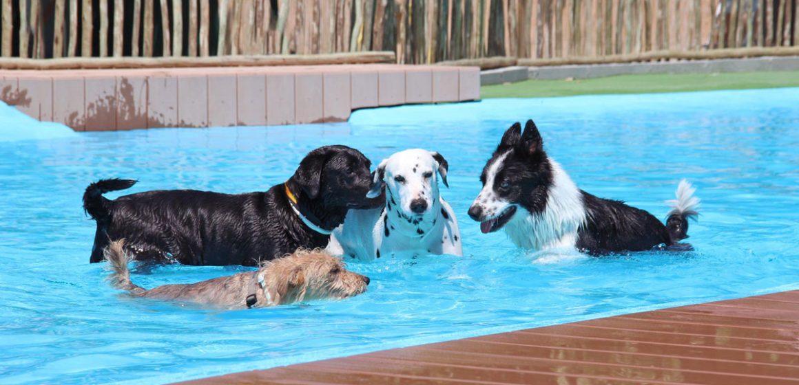 Alemania: realizan día de piscina para perros