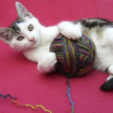 Cuatro cosas para mejorar la crianza de tu gato