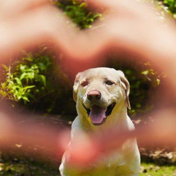 Tendencias humanas se reflejan en los animales de compañía