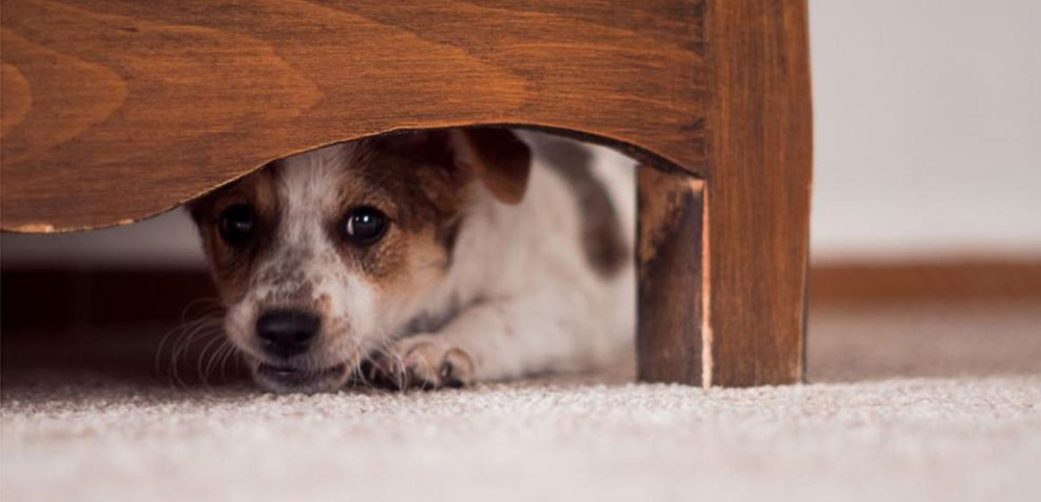 Fobias que comparten nuestras mascotas