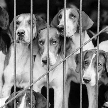 España contra el maltrato animal